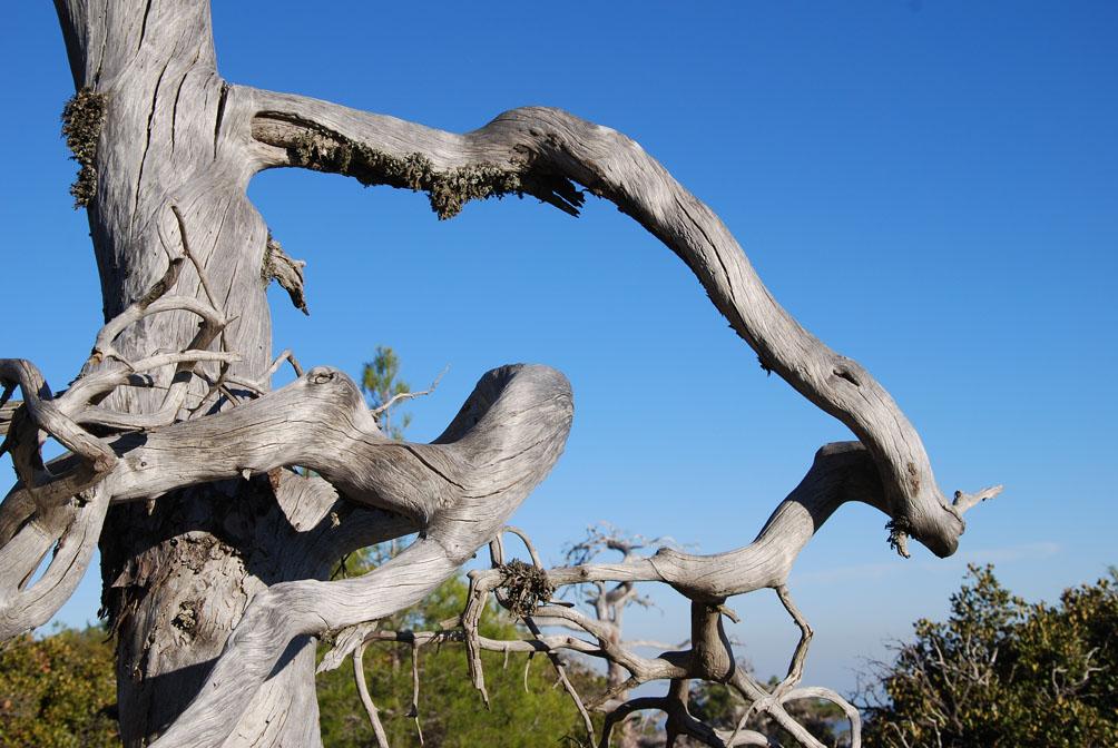Baumskulptur hoch oben im Troodos