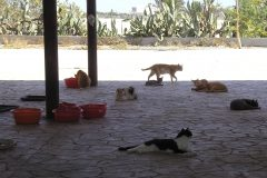 Futterstelle Friends of Larnaca cats