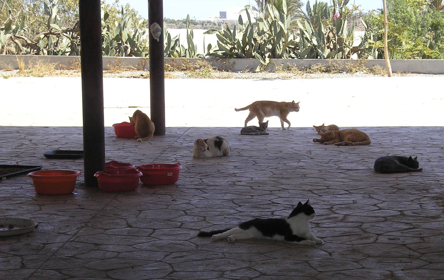 Futterstelle Friends of Larnaca cats