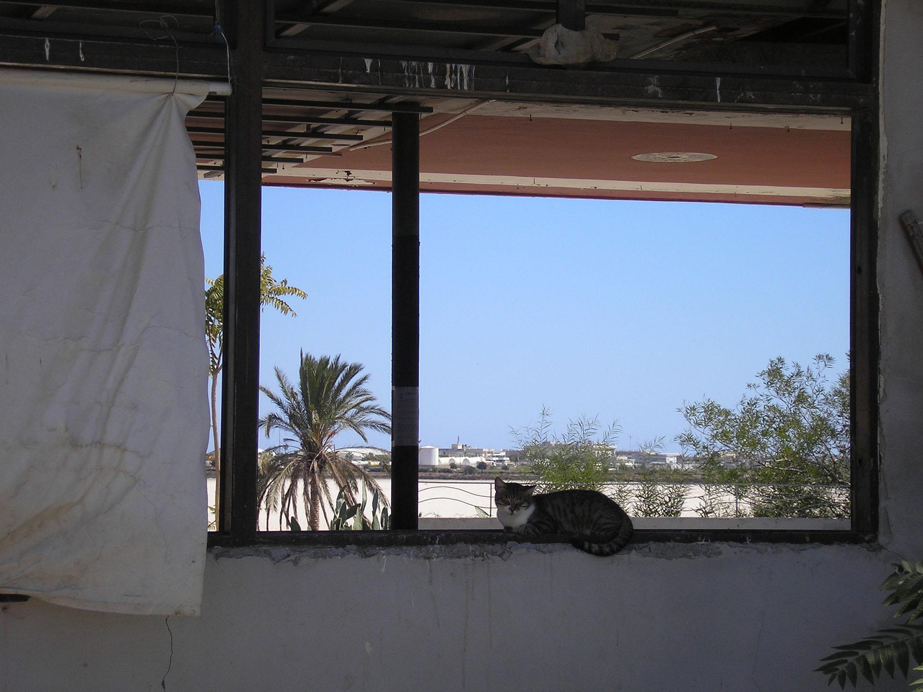 Eingangsbereich Friends of Larnaca cats