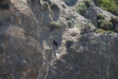 Ziegen am Berg